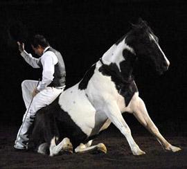 Unabashed Joy With Horses!