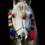 decorated-horse