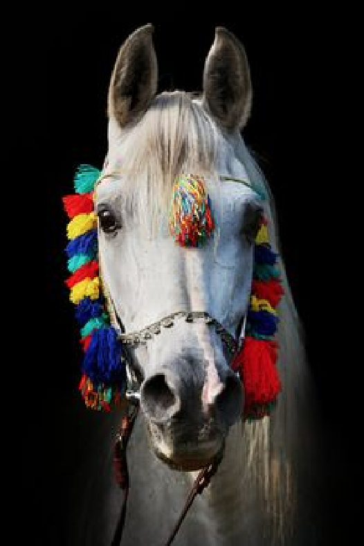 decorated-horse